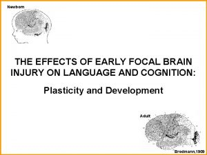 Newborn THE EFFECTS OF EARLY FOCAL BRAIN INJURY