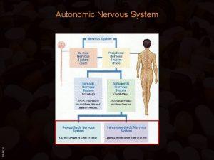 BIMM 118 Autonomic Nervous System BIMM 118 Autonomic