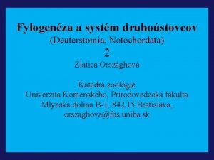 Fylogenza a systm druhostovcov Deuterstomia Notochordata 2 Zlatica