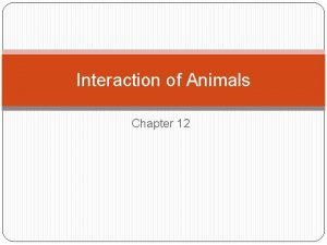 Interaction of Animals Chapter 12 Characteristics of Animals