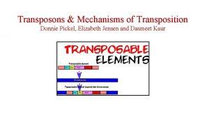 Transposons Mechanisms of Transposition Donnie Pickel Elizabeth Jensen