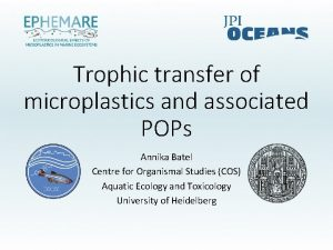 Trophic transfer of microplastics and associated POPs Annika