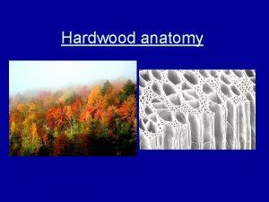Hardwood anatomy Hardwoods vessel element and pores Vessel