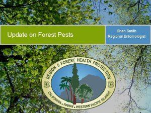 Update on Forest Pests Sheri Smith Regional Entomologist