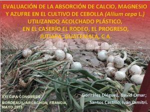 EVALUACIN DE LA ABSORCIN DE CALCIO MAGNESIO Y