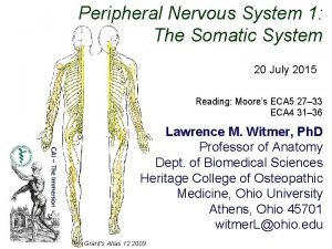 Peripheral Nervous System 1 The Somatic System 20