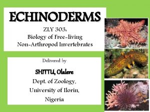 ECHINODERMS ZLY 303 Biology of Freeliving NonArthropod Invertebrates