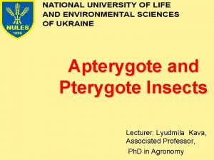 Apterygote and Pterygote Insects Lecturer Lyudmila Kava Associated
