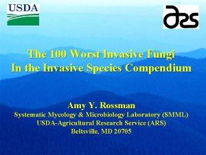 The 100 Worst Invasive Fungi In the Invasive
