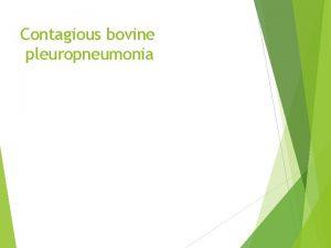 Contagious bovine pleuropneumonia Contagious Bovine Pleuropneumonia Overview Organism