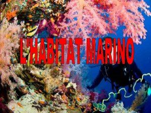 LECOSISTEMA MARINO Il mare costituisce un unico ecosistema