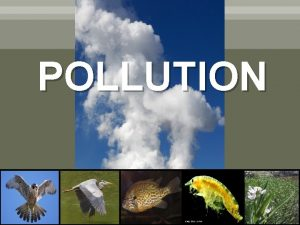 POLLUTION Vocabulary Pollution Sediment Habitat Food chain Ecosystem