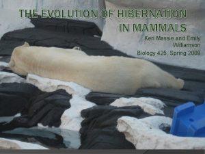 THE EVOLUTION OF HIBERNATION IN MAMMALS Keri Massie