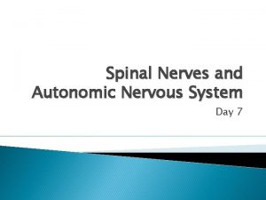 Spinal Nerves and Autonomic Nervous System Day 7