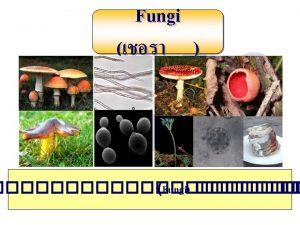 Fungi in the Jungle Cordycep Fungi Fungi Plant