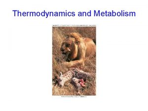 Thermodynamics and Metabolism Metabolism all the chemical reactions