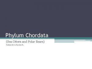 Phylum Chordata Sea Otters and Polar Bears Kellsie