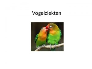 Vogelziekten Gezonde vogels Strakke veren Veren zijn niet