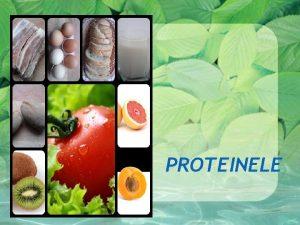 PROTEINELE Totul despre proteine Proteinele sunt din punct