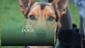HERMANN KOLB PRESENTS Copyright DOGS HERMANN KOLB PRESENTS