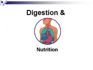 Digestion Nutrition 15 1 Intro to digestion Objective