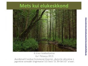 Mets kui elukeskkond https commons wikimedia orgwikiFile TarvasjC