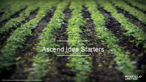 Ascend Idea Starters 2016 Win Field is a