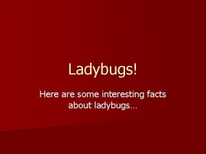 Ladybugs Here are some interesting facts about ladybugs
