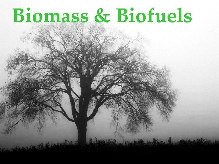 Biomass Biofuels Technology Biomass technology today serves many