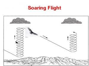 Soaring Flight Soaring Flight Andean Condor soaring http