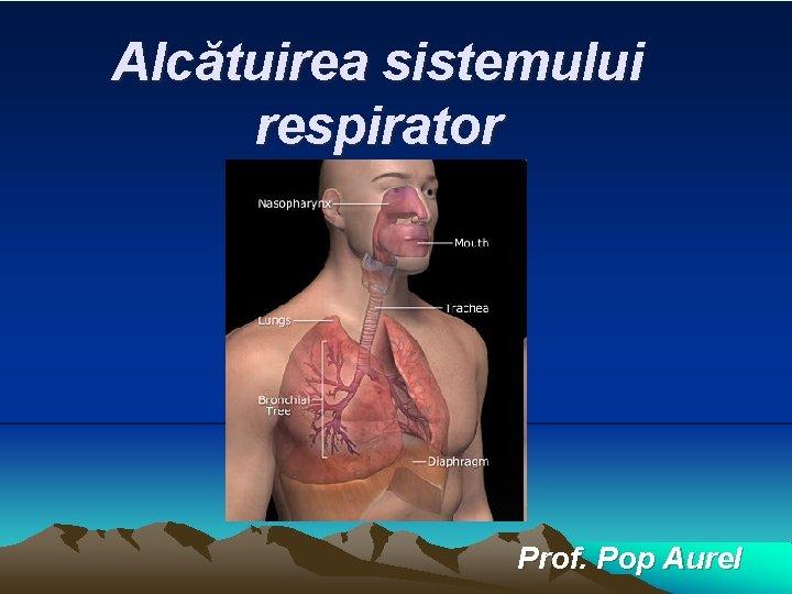 Alctuirea sistemului respirator Prof Pop Aurel Componentele sistemului