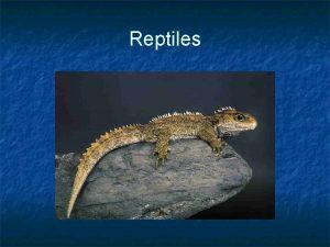 Reptiles Reptiles n n n First truly terrestrial