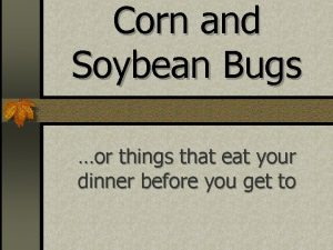 Corn and Soybean Bugs or things that eat