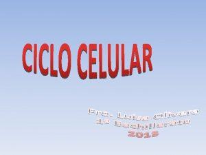 Concepto El ciclo celular comprende el conjunto de