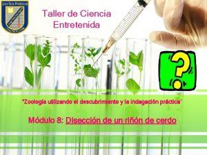 Taller de Ciencia Entretenida Zoologa utilizando el descubrimiento