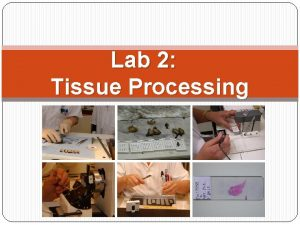 Lab 2 Tissue Processing Objectives What is tissue