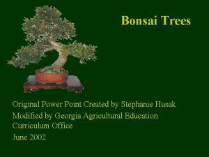 Bonsai Trees Original Power Point Created by Stephanie