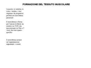 FORMAZIONE DEL TESSUTO MUSCOLARE I muscoli le vertebre