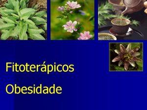 Fitoterpicos Obesidade Mercado Brasil 1 Mercado Brasileiro de