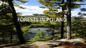 FORESTS IN POLAND THE AREA OF FORESTS IN