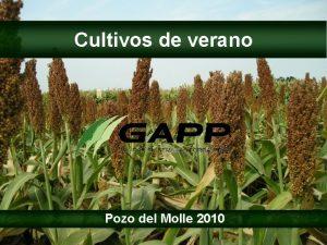 Cultivos de verano Pozo del Molle 2010 Lneas