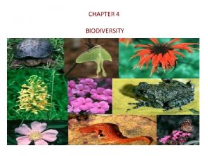 CHAPTER 4 BIODIVERSITY Introduction To Biodiversity Major contributor