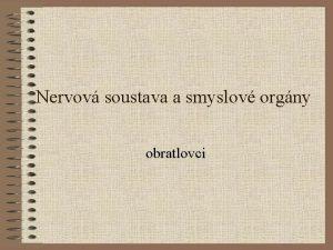 Nervov soustava a smyslov orgny obratlovci NEURON POPIS