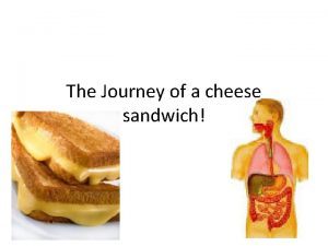 The Journey of a cheese sandwich The Mouth