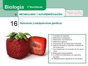Biologa 2 Bachillerato III METABOLISMO Y AUTOPERPETUACIN 16