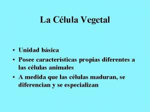 La Clula Vegetal Unidad bsica Posee caractersticas propias