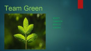 Team Green MADDY CAMERON MARYJO HANNAH Background Information