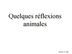 Quelques rflexions animales Cher Alain 12 2008 Diaporama