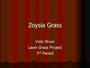 Zoysia Grass Vicki Skvor Lawn Grass Project 3