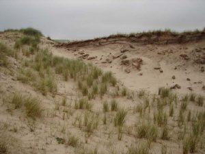 Overeenkomst broedvogelbevolking Soorten van open gebied en schrale